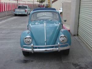 Insurance Bug (21)