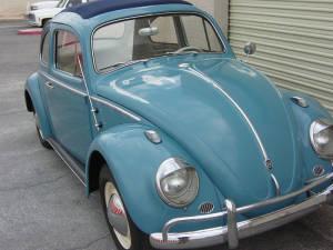 Insurance Bug (22)