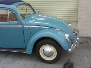 Insurance Bug (23)