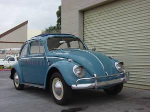 Insurance Bug (26)