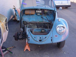 Insurance Bug (7)